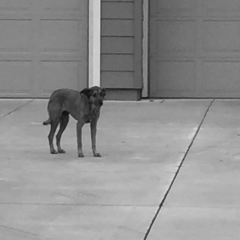 dog-1-of-1
